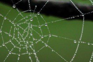 delicate_web_network_image_brand