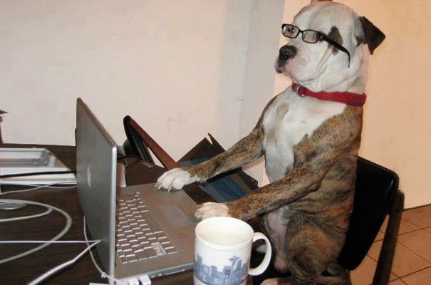 Dog-on-laptop_web